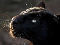 Песня слова снегом белым все замело