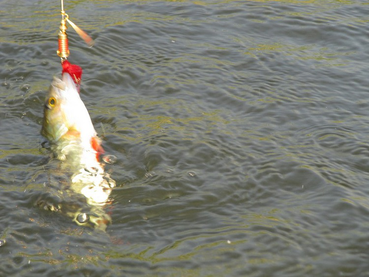 www летняя рыбалка