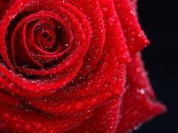 Категория стихи про лето для детей