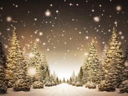 Цветы для посадки весной