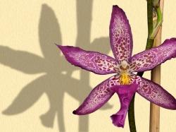 Стихи про зиму прикольные