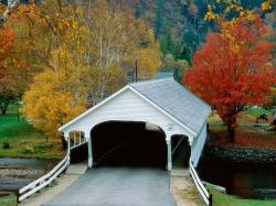 уход за розами осенью фото