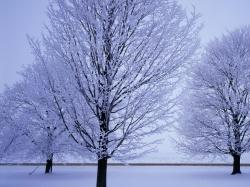 черенкование роз осенью