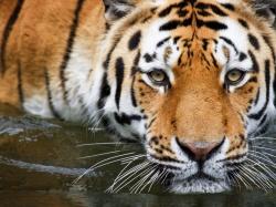 как правильно черенковать розы осенью