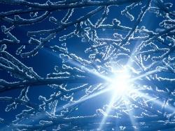 обработка роз осенью