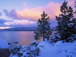 схема обрезки винограда 1-2-3