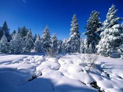 Схема посадки смородины черной