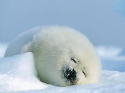 как правильно ухаживать за плодовыми деревьями осенью
