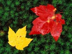 Иван Бунин стихи о лете