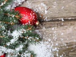 томат розовый фламинго фото