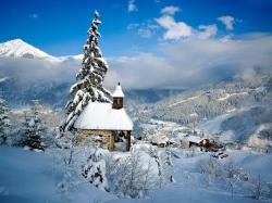 томат черный принц