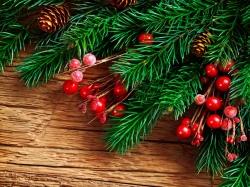 томаты пузата хата фото